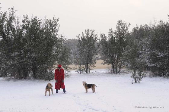 Christmas Eve Backyard Blog